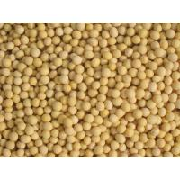 Quality yellow soybeans for sale