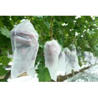 Buy PP Coreless Spunbond Agriculture Non Woven Fabric Water Resistant Lightweight at wholesale prices