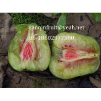 Quality red kiwi seedlings red kiwi plant grafted kiwi seedlings red pulp kiwi fruit seedlings pulp for sale