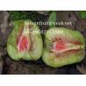Buy cheap red kiwi seedlings red kiwi plant grafted kiwi seedlings red pulp kiwi fruit from wholesalers