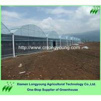 Quality tunnel greenhouse economical for sale