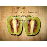 Quality red kiwi seedlings young red kiwi plant grafted red seedlings 2 years young grafted kiwi for sale