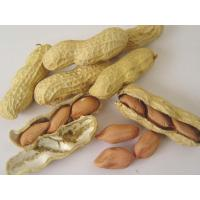 Quality Peanut inshell for sale