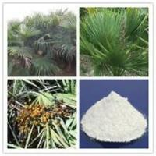 Quality high quality Saw Palmetto Extract/ Saw palmetto P.E/ Saw Palmetto extract 45% Fatty Acids for sale