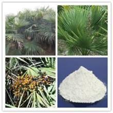 Quality Saw Palmetto Fruit Extract/ Saw palmetto fruit P.E/ Saw Palmetto extract 98% for sale
