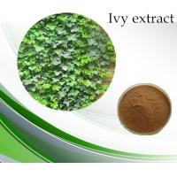 Quality Chinese Ivy Extract / Hvederahelix L. Hederacoside C 10% for sale