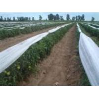 Quality Hydrophilic Non Woven Biodegradable Fabric 50cm ~ 200cm Width For Ground Cover for sale