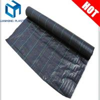 Quality black color  Anti UV Woven Ground Cover With Greem Line For Agriculture ground cover fabric for sale
