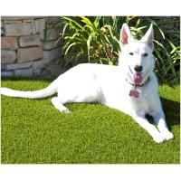 Buy U Shape 20mm Pet Friendly Fake Grass PE Soft And Durable Indoor / Outdoor Use at wholesale prices