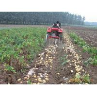 Quality Potato Harvester For Sale for sale
