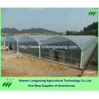 Buy tunnel greenhouse economical at wholesale prices