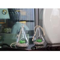 Quality Glass Plant Holders / Glass Plant Terrarium For Indoor Decoration for sale
