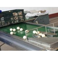 Quality Automatic 1-6 Lines Egg Stamping Machine Inkjet Coding Machine 1200x280x200mm for sale