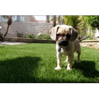 Quality Easy Installation S Shape Realistic Looking Artificial Grass Turf For Pets for sale