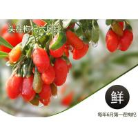 China Weight Loss Herbal Dried Fruit Pure Goji Berry Wolfberry / Chinese Wolfberr on sale