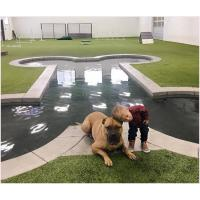 Buy 20mm Non Toxic Pet Artificial Turf Green With Good Drainage For Pets And Dogs at wholesale prices