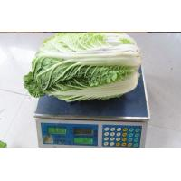 China Napa Chinese Cabbage Fresh New Harvested , No Pesticide Residue Contains Folates on sale