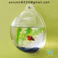 Buy acrylic wall mount fish bowl at wholesale prices