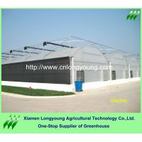 Quality large plastic greenhouse sale for sale