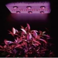 China 1000W hydroponic growing system Noah 6S high power cob led light for indoor greenhouse on sale