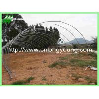 Quality agricultural plastic tunnel greenhouse for sale