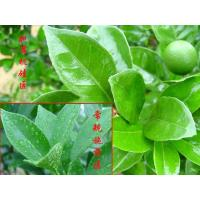 Buy Agricultural Silicone Surfactant IOTA-2000 equivalent to Silwet L77 at wholesale prices