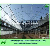 Quality tunnel greenhouse economical for agriculture for sale