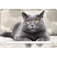 Quality Custom 7x11cm Lovely Cats 3d Fridge Magnets With Notepad For House Refrigerator for sale