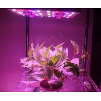 Quality 620 Watt(UV/IR) LED Grow Lamp Lights 3000k Blue And Red 5W Diode , 120V Power Cord for sale