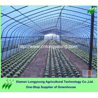 Quality hot agriculture greenhouse for sale