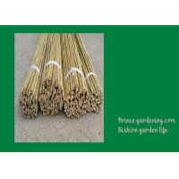 Quality 6 Foot Strong Long Bamboo Garden Stakes Nature Straight 6 - 8mm for sale