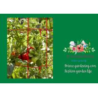 Quality Powder Coated Steel Tomato Plant Stakes / Support For Tomato Plants for sale