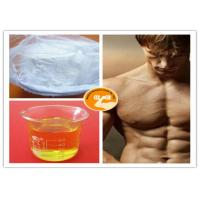 Buy Male Hormone Test Sust 250 Clostebol Acetate Turinabol White Powder / Yellow Oil at wholesale prices