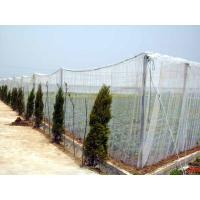 China Plastic Agriculture Shading/Scaffolding Netting on sale