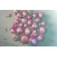 China Organic Pure Natural Red Asian Shallot Contains Folate , Zinc on sale