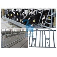 Quality Steel Cow Head Lock Fence Barriers Self Locking Feeder Panels For Pasture for sale