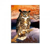 Quality 30x40cm Size 3D Pictures Of Animals 0.6mm PET Material Durable for sale