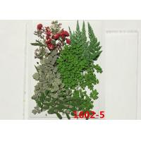 Wedding Decoration Mounting Pressed Flowers , Dried Green Flowers For Gifts Card Ornament