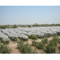 Buy Waterproof Agriculture Non Woven Fabric Roll 4% UV Treated Weed Control at wholesale prices