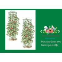 """Quality Heavy Duty Metal Square Tomato Cages With 8"""" Square Openings for sale"""