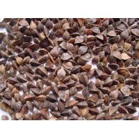 Buy buckwheat unhulled at wholesale prices
