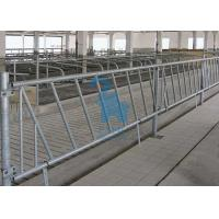 Quality Livestock Raising Locking Feed Barriers Animal Headlocks For Cattles for sale