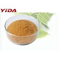 Quality Green Tea Extract Natural Weight Loss Powder Sugar Free Food Grade Powder for sale