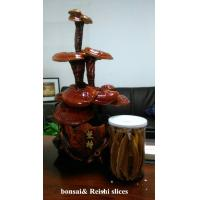 Buy cheap reishi mushroom series: bonsai from wholesalers
