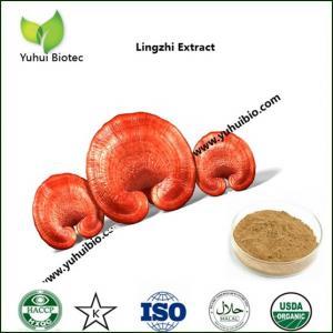 China reishi spore powder,reishi powder,reishi broken spore powder,best reishi mushroom supplement on sale