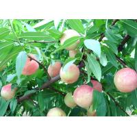 China 100% pure sweet peach powder China wholesale/ factory price juicy peach powder flavour on sale