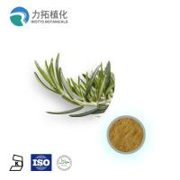 1. GMP Manufacture Rosemary Extract Rosmarinus officinalis for sale