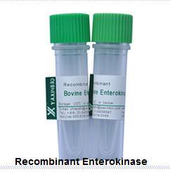 Buy cheap Recombinant Enterokinase  E.coli Recombinant Enterokinase Supplier from wholesalers
