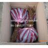 Buy cheap Jin Yan kiwi seedlings(Golden color or Golden dragon kiwi fruit) yellow color from wholesalers