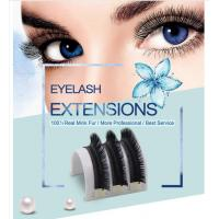 Quality Top quality premade fanned 3D Eyelash Extensions 0.07 Camellia Lashes for sale